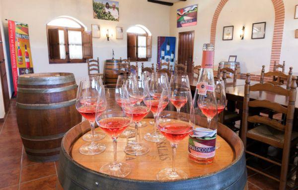 Sábado 28 de noviembre, ruta del vino Cigales 1